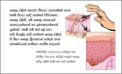 biology-bits-cell-parts-slide-01