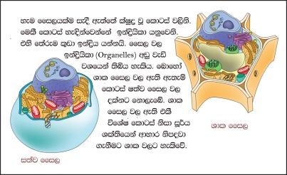 biology-bits-cell-parts-slide-02
