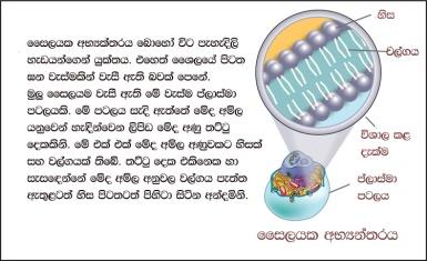 biology-bits-cell-parts-slide-03