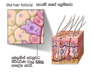 old hair follicle