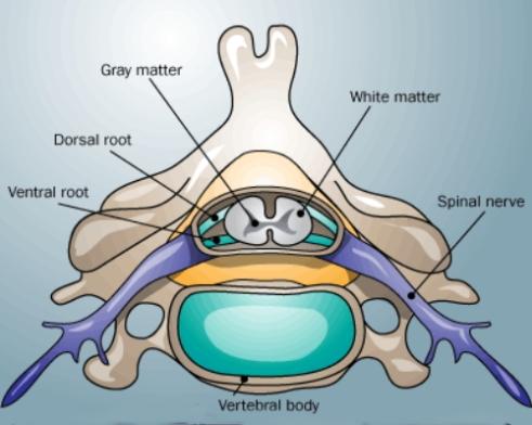 nerves 2