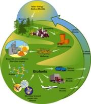 biofuelsCycle