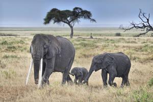Elephant Climate 1