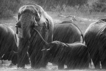 Elephant Climate 2