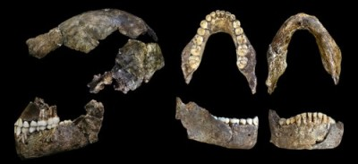 Multiple views of Homo naledi skull and jaw fragments