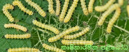 agricultural+pests_catapillars_155115629