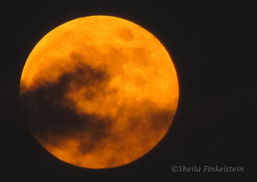 fullmoon-orange1-oct2013-IMG_1961