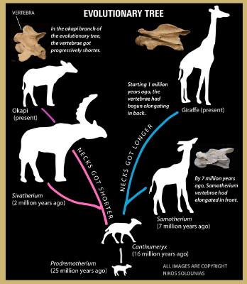 giraffe-long-neck-151006b-02
