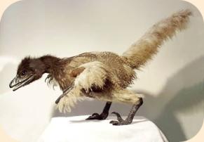 bambiraptor
