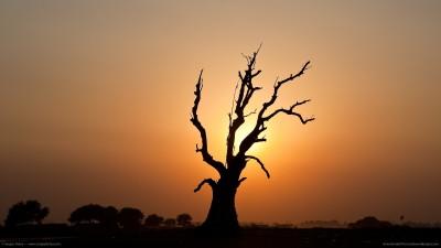 evil-dead-tree