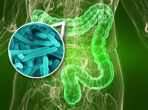 gut_bacteria (1)