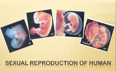 grade-9-sexual-reproduction-of-human-1-638 (1)
