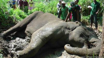 150908120319_lanka_dead_elephant_624x351_rahulsamanthahettiarachchi