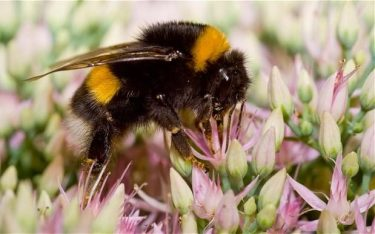 bumblebee_2870112b-large_trans++pJliwavx4coWFCaEkEsb3kvxIt-lGGWCWqwLa_RXJU8