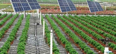 Solar-Pumps-For-Drip-Irrigation