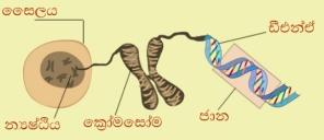genes-and-chromosome