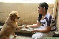 aid695085-728px-praise-a-dog-step-1