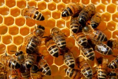 162896913-bee