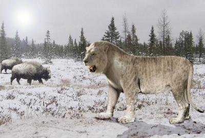 cave_lion
