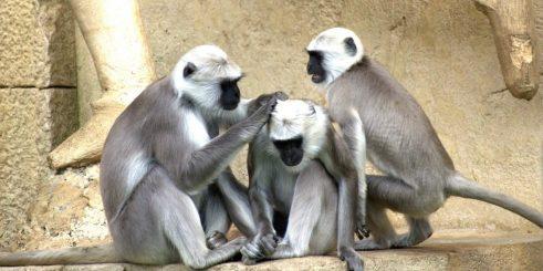 green-monkeys-112275_1920-1104x552