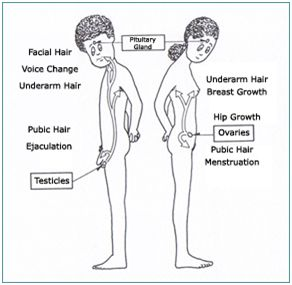 Image result for the onset of puberty