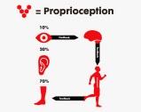 Image result for proprioception