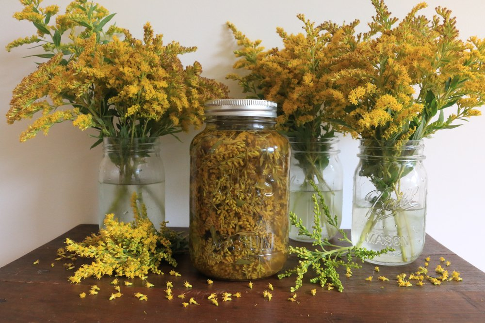 Plant Potions: Tinctures.Infusions.Concoctions — Culinary Witch