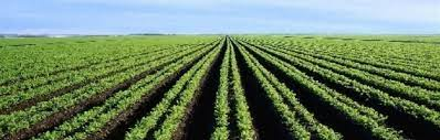 Soil: The Foundation of Agriculture | Learn Science at Scitable